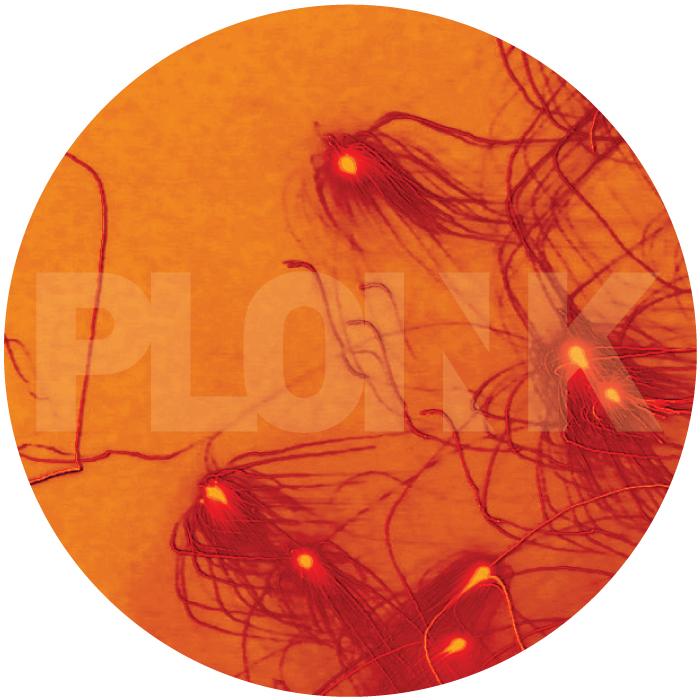 PL009NK<br />KSMISK<br />GINNUNGAGAP EP<br />Release date: 07DECEMBER15