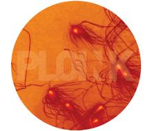 PL009NK<br />KSMISK<br />GINNUNGAGAP EP<br />Release date: 07DEC15